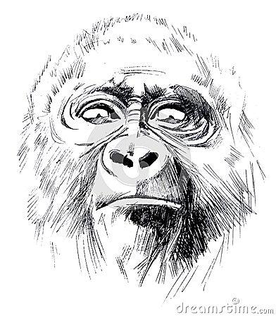 Free Monkey Royalty Free Stock Images - 67336739
