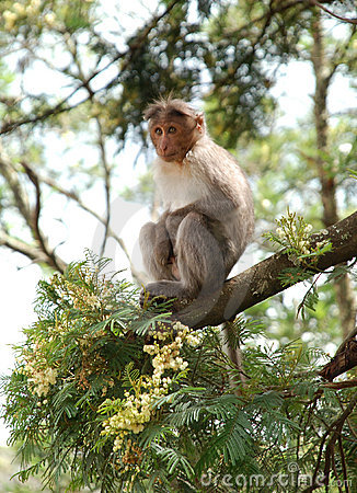 Free Monkey Stock Photos - 7606813