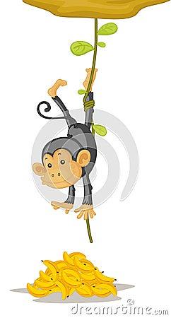 Free Monkey Stock Image - 8877871