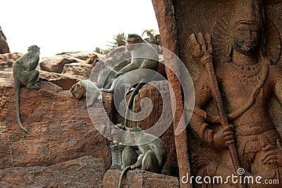 Monkey Activities