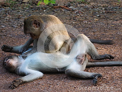 Monkey Affection