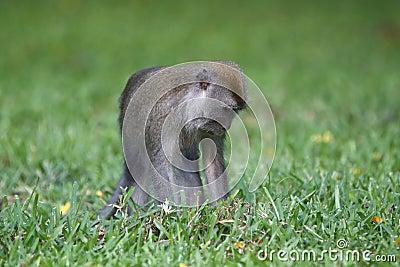 Monkey alone