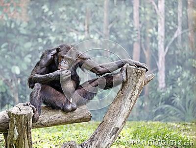Monkey antics. Stock Photo