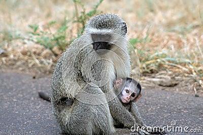 Monkey and Baby