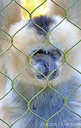 Monkey in Captivity
