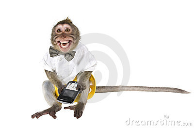A monkey with a cell phone. A phone is broken!