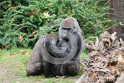 Monkey comforting