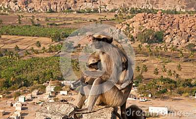 Monkey with a cub overlooking boulder landscape
