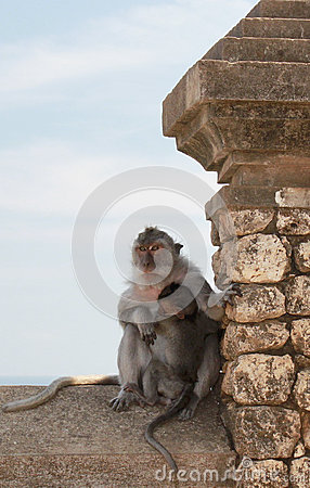 Free Monkey Family. Mother And Baby Royalty Free Stock Image - 31120696