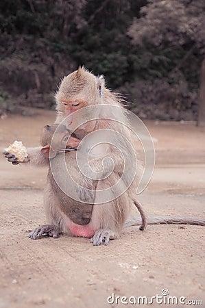 Free Monkey Feeding A Child Royalty Free Stock Photography - 29162937