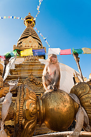 Monkey in front of Monkey Temple