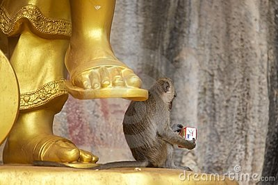 Monkey by a golden Chinese god statue