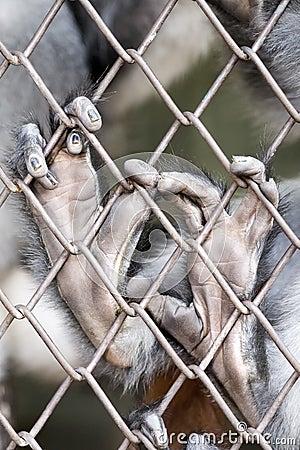 Free Monkey Hands Stock Photos - 8006783