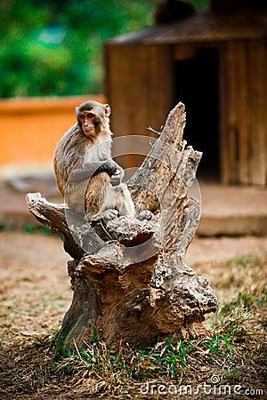 Monkey with hope