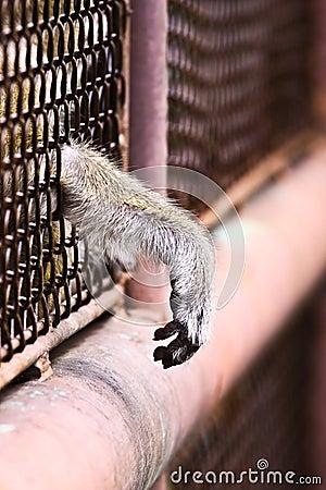 Monkey and hope freedom