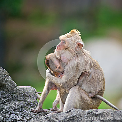 Two monkeys hugging drawing - photo#11