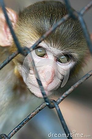 Free Monkey In Jail Royalty Free Stock Photos - 10792038