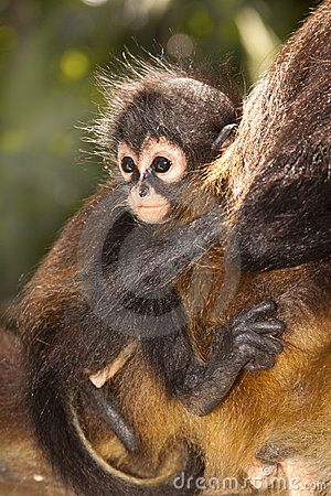 Free Monkey In Mexico Stock Image - 18512981