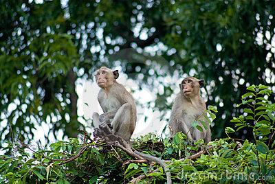 Monkey looking and sitting on tree