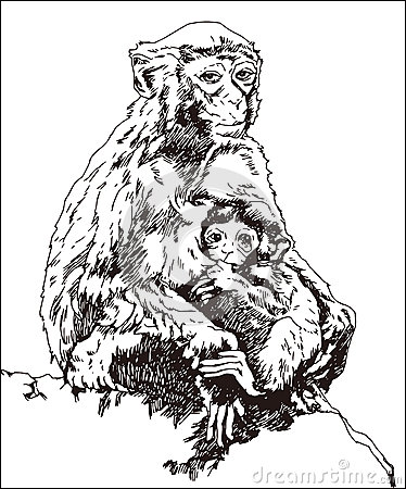 Free Monkey, Mother And Child Royalty Free Stock Photography - 60101287