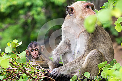 Monkey, mother with baby