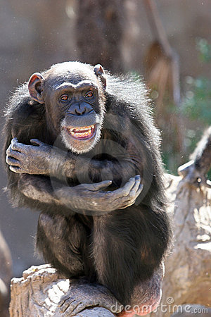 Monkey o riso e o arreganho em multidões no jardim zoológico