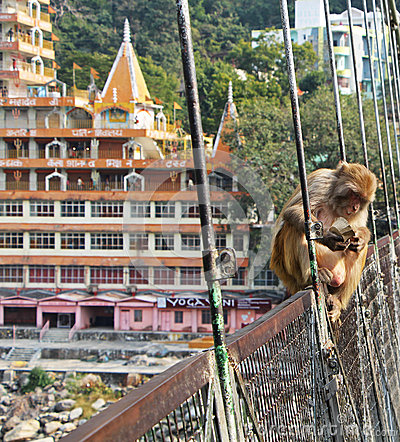 Free Monkey On Rishikesh Lakshman Jhula Bridge, India Stock Images - 67783994