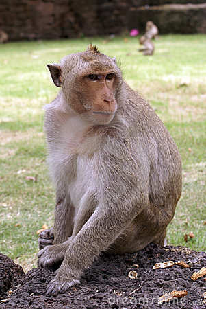 Free Monkey On The Wall Stock Photography - 6052512