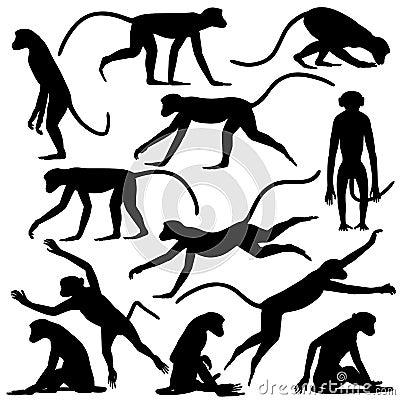 Monkey poses