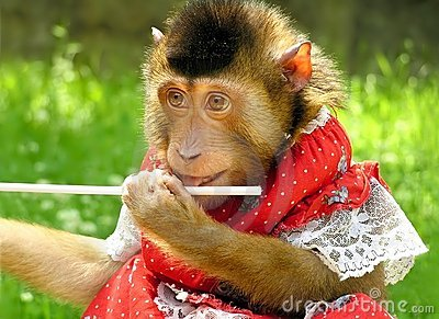 Monkey in a red dress