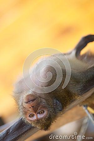 Monkey relax