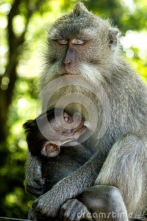 Monkey with it s child