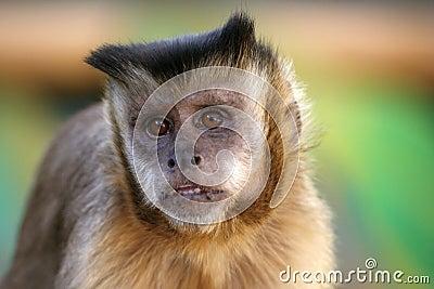 Monkey s hope