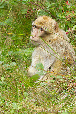A monkey is searching