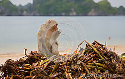 Monkey searching for food