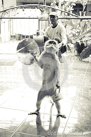 Monkey show Editorial Stock Photo