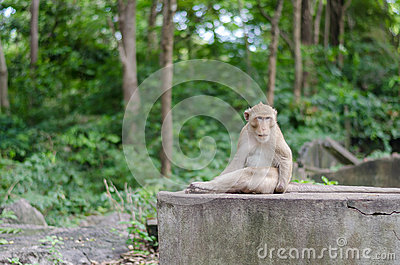 monkey sits on the rock