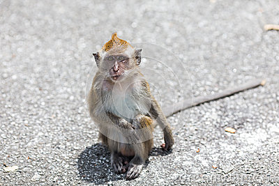 Monkey in the Street