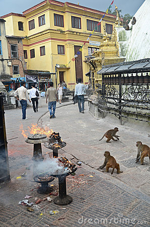 Monkey Temple in Nepal Editorial Stock Image