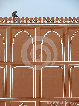A monkey on the wall of Jaipur City Palace, India