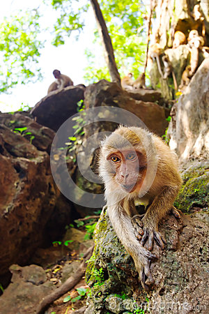 Monkey in widelife, Thailand