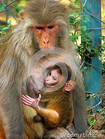 Free Monkey With Child Stock Photo - 14877980