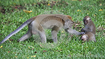 Monkey with young