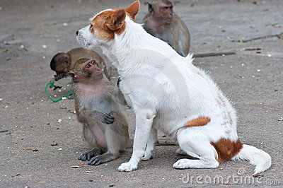 Monkeys checking for fleas