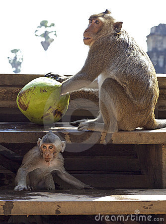 Monkeys and Coconuts