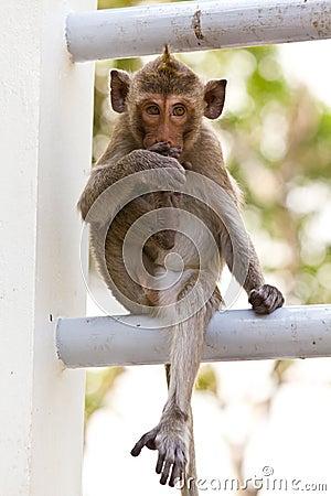 Monkeys cute sitting on a steel fence