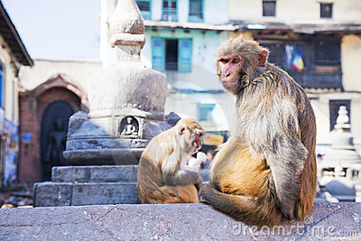 Monkeys at Monkey Temple, Kathmandu, Nepal