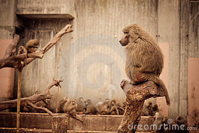 Monkeys - Zoo Madrid