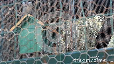 Mono trastornado en una jaula almacen de video