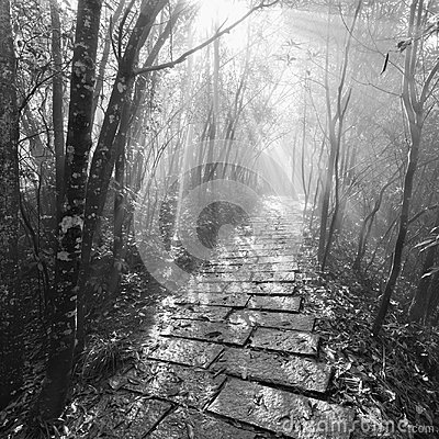Free Monochrome Image Of The Wet Stone Path In Zhangjiajie Forest Park. Royalty Free Stock Image - 104263686